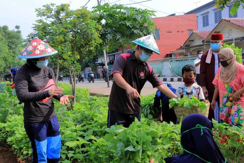 IMG-wali-kota-panen-sayuran-bersama-warga-di-ecofarm-mekarsari